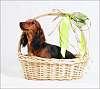 Romeo in basket