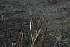 Cattail Swirl