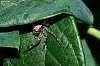 Peek a boo - I can see you