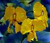 Crinkled Flowers.....