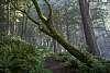 Woods around Canon Beach