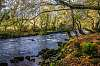 Autumnal River Dwyfor, Llanystumdwy