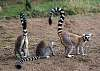 Madagascar - Lemurs! part 1
