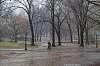 it's rainy. Central Park. NYC.