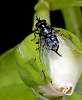 Preening Fly.........