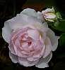 Shades of Pink.........