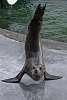 Seal Hamming It Up