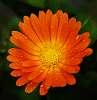 Orange............