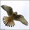 I fly!
