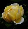 A golden opening.......