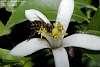 Vintage Macro ( Bee )