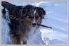 2015-03-01-Dog-walk