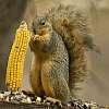 Get ready! Wssa squirrel frenzy....