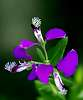 Unusual little flower.