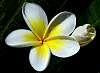 Flowers of Summer linger....