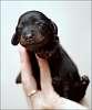 New dog :)