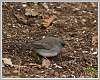 2015-04-25-foraging-birds