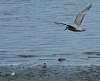 A coupla seagulls