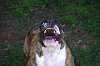 When a dog barks...