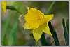 Spring-Foilage