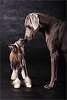 Weimar pointer & Chinese crested dog