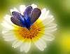 52-7-21-Natural - Flower