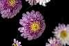 Flower Mosaic........
