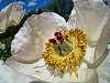 Flower and fisheye
