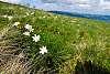 tiny flowers on mountain peak