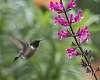 DA*300 and Hummingbirds