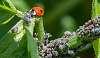 Ladybird supermarket