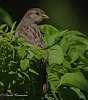 Sparrow Porn