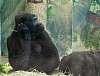 Thinker in captivity.