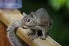 Squirrel!