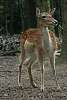 52-7-25-Natural - Wildlife - Winner