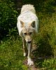 Haliburton Wolf Sanctuary