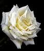 To Think White.........