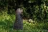 A Drumlin Woodchuck