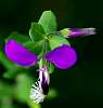 Purple Beauty.............