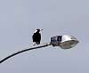 A Magpie sees the light............