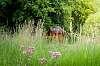 Cabin through the grass