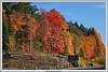 A few more fall colours