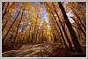 Fall-colours_Arrowhon-Road
