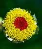 Lost my Petals......