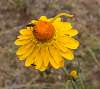 Life on a Paper Daisy