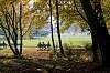 Englischer Garten - Autumn