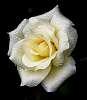 White.......Light but.......