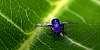 A tiny Boater Fly.................