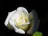 Bright White..............