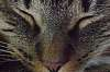 Patterns - Cat Face Close-up